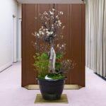 悠仁さま新年の春飾りご制作と新年一般参賀に6万8千人